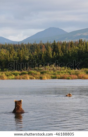 Two bears fishing for salmon - stock photo