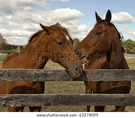 Two beautiful bay horses behind a farm fence surrounded by a blue cloud filled sky.