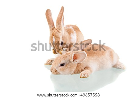 two beautiful bunnies, a washing and the other is lying
