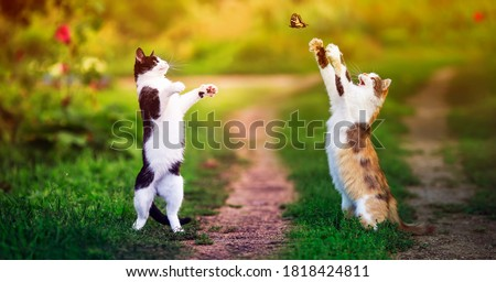 Photo of  two beautiful cats walking in a Sunny summer garden and catch a flying swallowtail butterfly with their paws