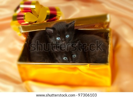 two beautiful fluffy little kittens,in gold box-gift on gold background-cloth