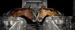 Two beautiful horses flirting.