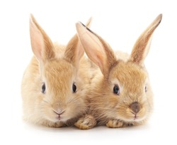 Two beautiful rabbits isolated on a white background.