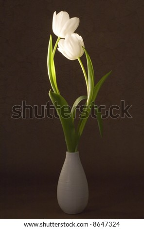 Two beautiful tulips in a vase on artistic background