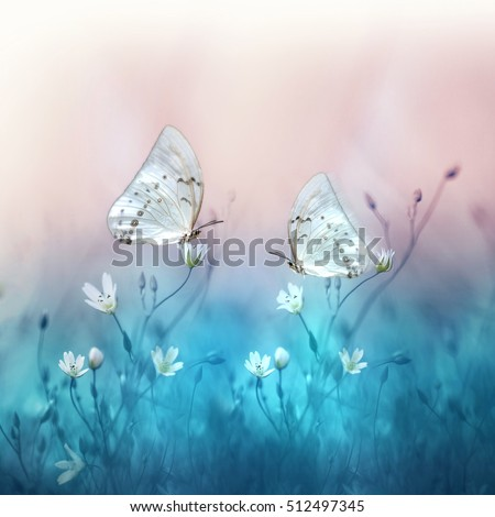 Two beautiful white butterfly on small white flowers on blurred blue and soft pink background. Spring and summer floral background with butterflies. Gentle romantic dreamy artistic image