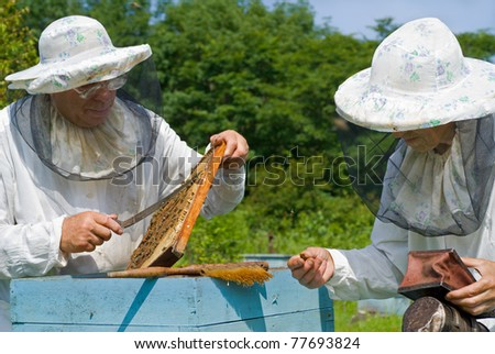 Two beekeepers are at hive on an apiary. Summer, sunny day.