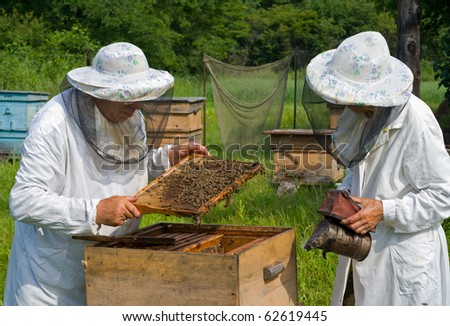 Two beekeepers work on an apiary. Summer.