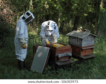 Two beekeepers working with honey bees and hive