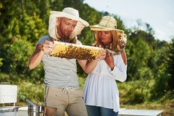 Two beekeepers works with honeycomb full of bees outdoors at sunny day. Man and woman.