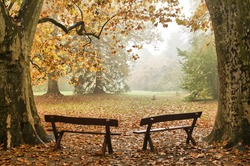 Two benches in a colorful Autumn wood