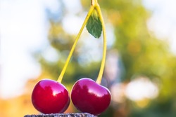 Two berries of a cherry on one branch are on a wooden surface on the background of the garden