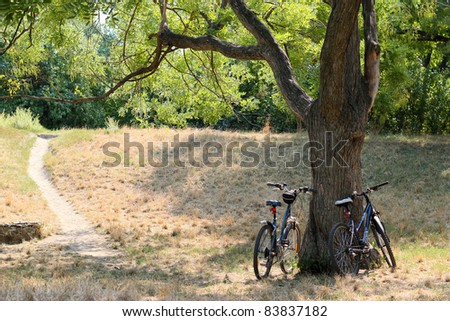 Two bicycles standing against acacia tree in the forest