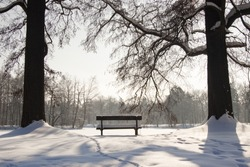 Two big tree and wooden empty bench in the park - Swierklaniec. Winter time