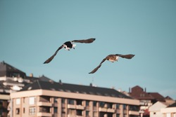 Two birds flying in an urban area with buildings in the background on a sunny day