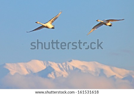 Two birds flying over mountains in blue sky.