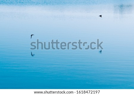 Two birds flying with his reflects over the blue sea. Background. Calm concept