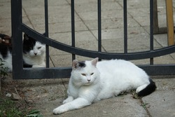 Two Black and White Cats Relaxing by the Cemetery Gates in Prague, Czechia