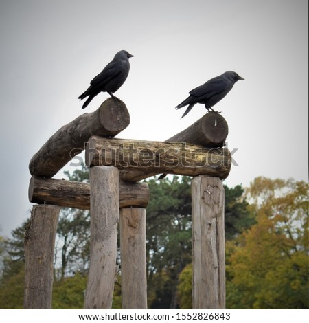 Two black birds perched on wooden construction #1552826843
