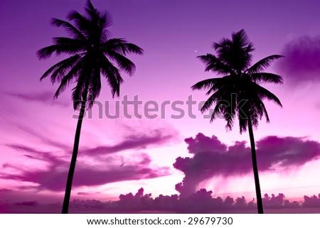 Two black palm on a night beach purple night - stock photo
