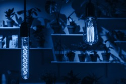 Two blue light bulbs in the dark room.. Main color trend concept.