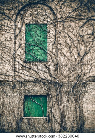 An early california building is overgrown with vines... pictures ...