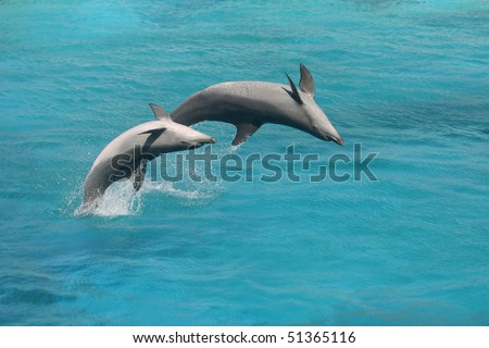 Two Bottle Nose Dolphins jumping in blue water upside down