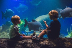 Two boys look at the fish in the aquarium.