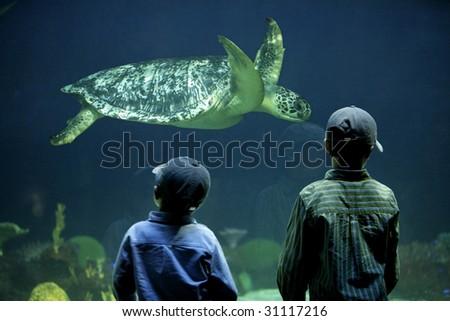 two boys watching a sea turtle in an aquarium