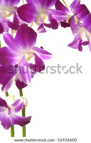 Two branch of violet orchid