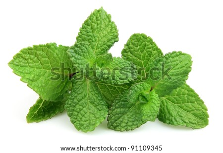 Two branches of fresh mint on a white background