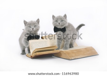 Two British kitten with a book on a white background.