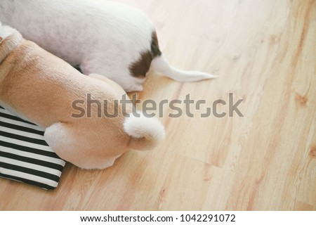 Two brown dog tails - Shutterstock ID 1042291072