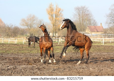 Two brown horses playing with each other