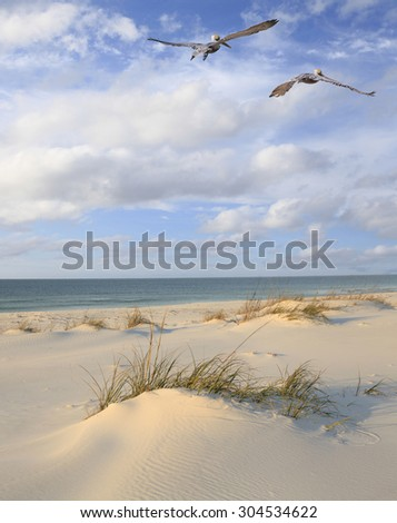 Two Brown Pelicans Fly Over a White Sand Florida Beach #304534622