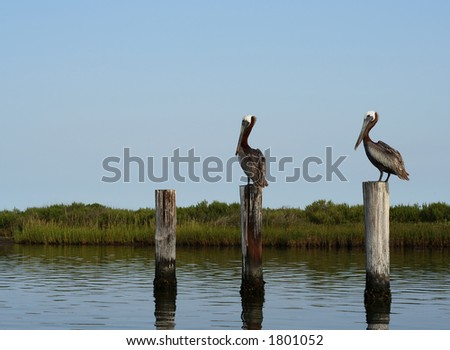 Two brown pelicans perched atop wooden posts in quiet water.
