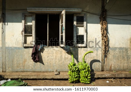 Two bunches of green bananas standing on dirty ground near shabby wall with peeling paint and with open window at banana market, Yangon, Myanmar