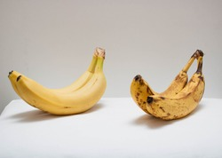 Two bunches of ripe  and fresh bananas on a gray and white background. Studio shot. Healthy vegan food. Yellow bananas