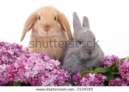 two bunny among the purple lilac