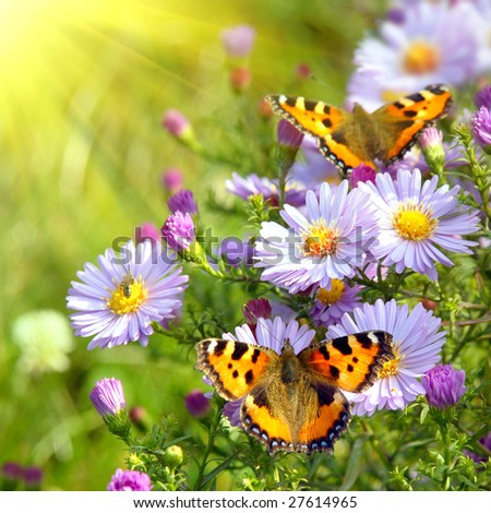 two butterfly on flowers #27614965