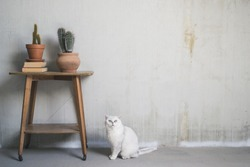 Two cacti on a vintage table in an industrial room with a white cat sitting next to it.