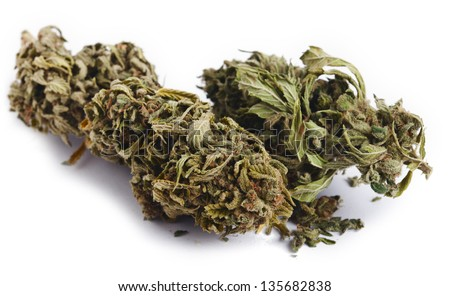 Two Cannabis buds that had been grown by hydroponic process, isolated on white background.