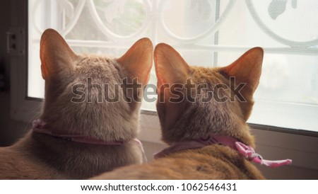 Two cats are stares out of the window.Two cats are best friends.vintage tone.