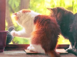 Two cats are trying to catch a bird through the window mosquito net. Cats sits on window sill
