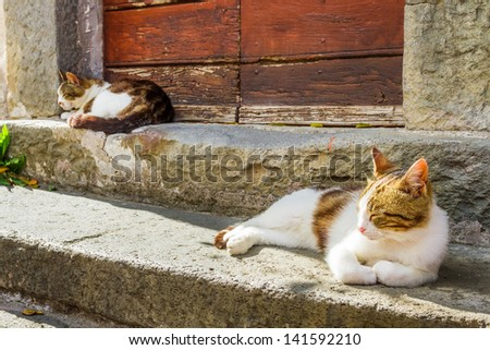 Two cats basking in the sun on the porch