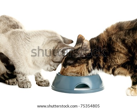 Two cats eating from one bowl over white