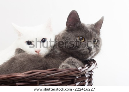 two cats in a wicker basket on a white background