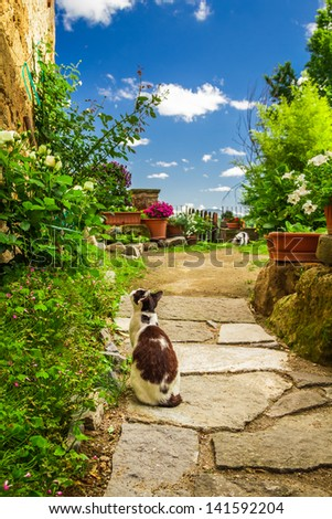 Two cats in ancient garden