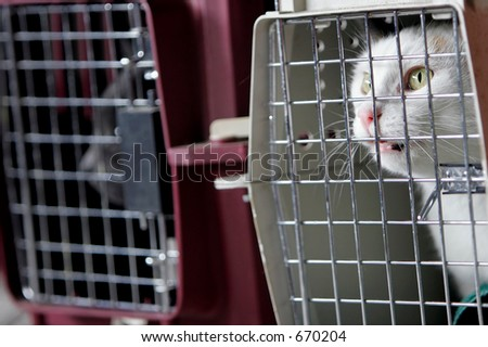 Two cats in crates or cages.