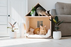 Two cats in wooden cat house living room scandinavian modern interior