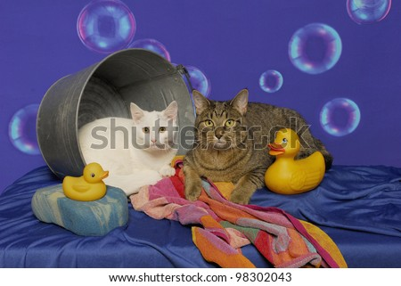 Two cats lay inside a bathtub with striped towel, yellow rubber ducks, sponge and floating bubbles